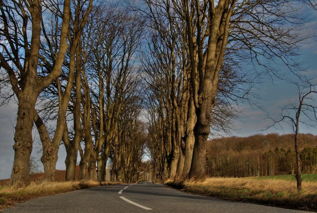 Estrada com árvores de 'Elm'